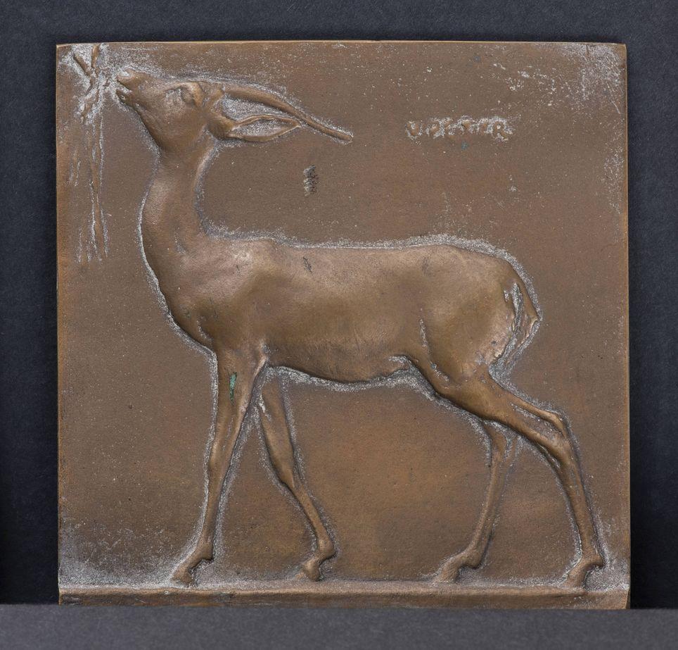 Gazelle broutant