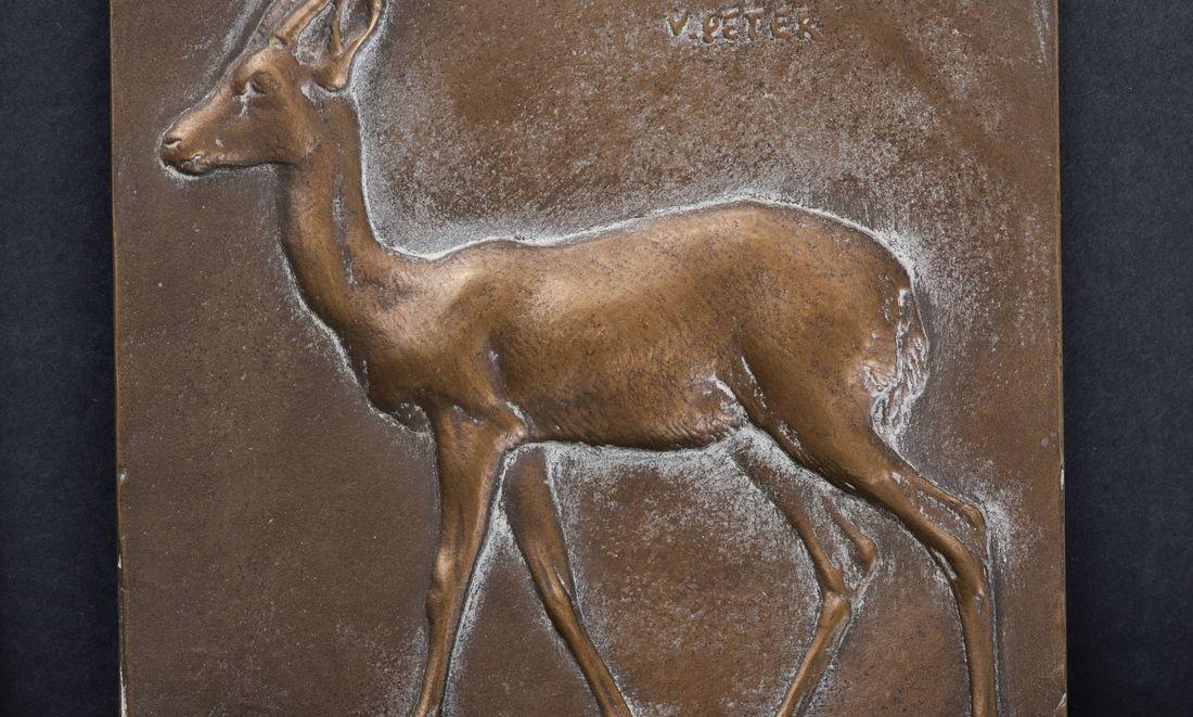 Gazelle passant