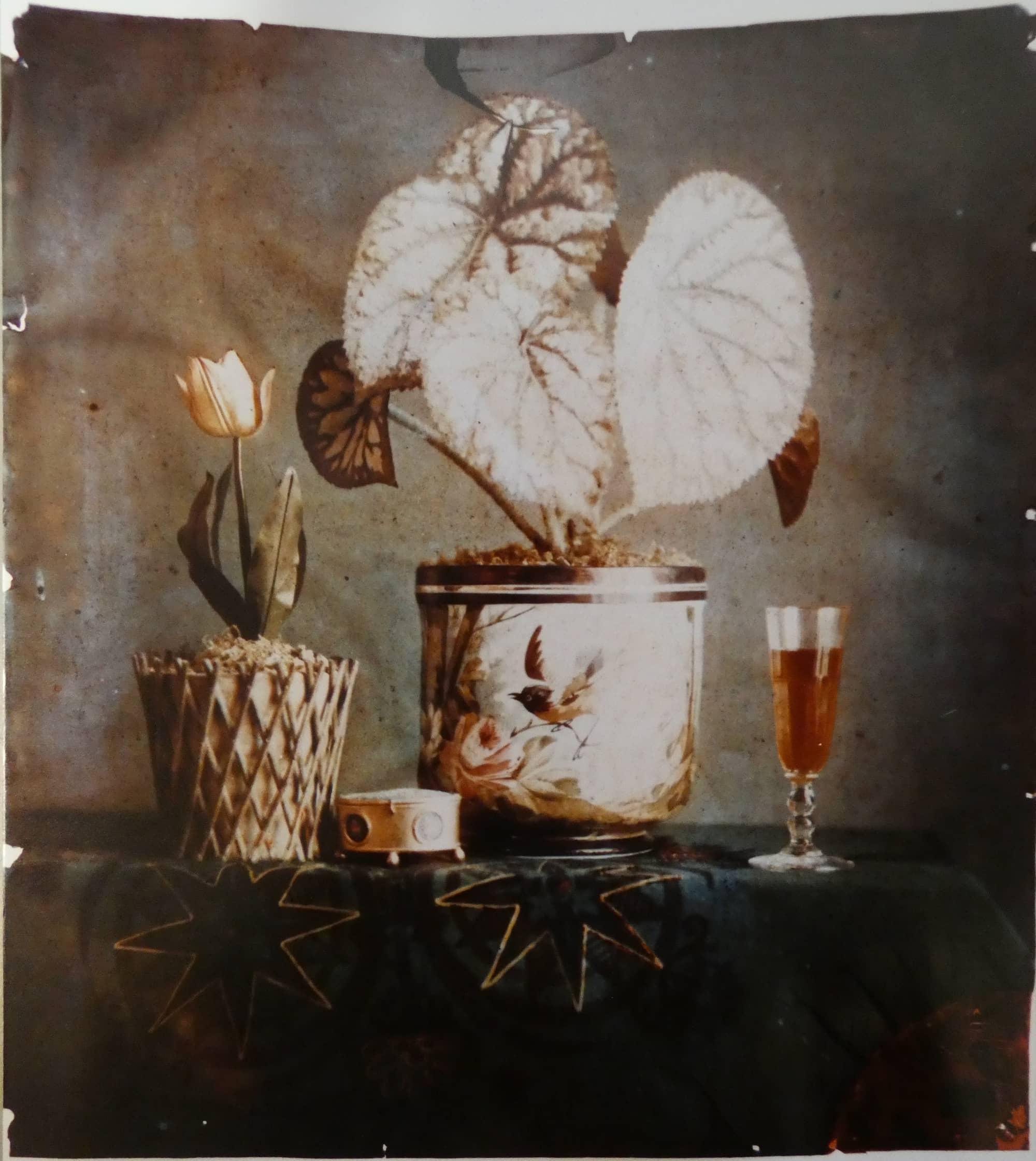 Vase au bégonia, verre de vin et tulipe